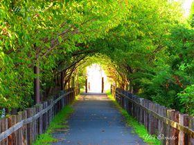 倉敷児島「風の道」は瀬戸内海まで楽しめる花の道