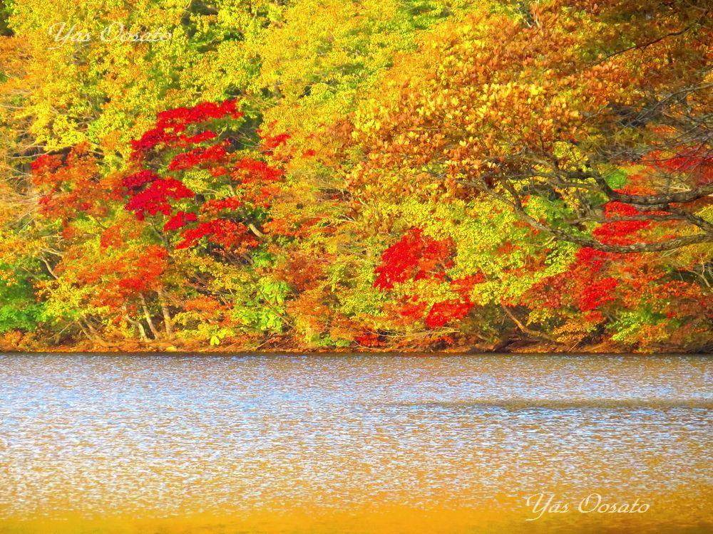 赤沼の紅葉