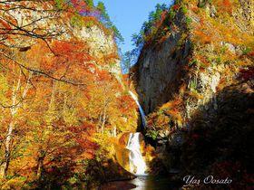 青森「幻の松見の滝」の紅葉は往復18km歩く価値がある