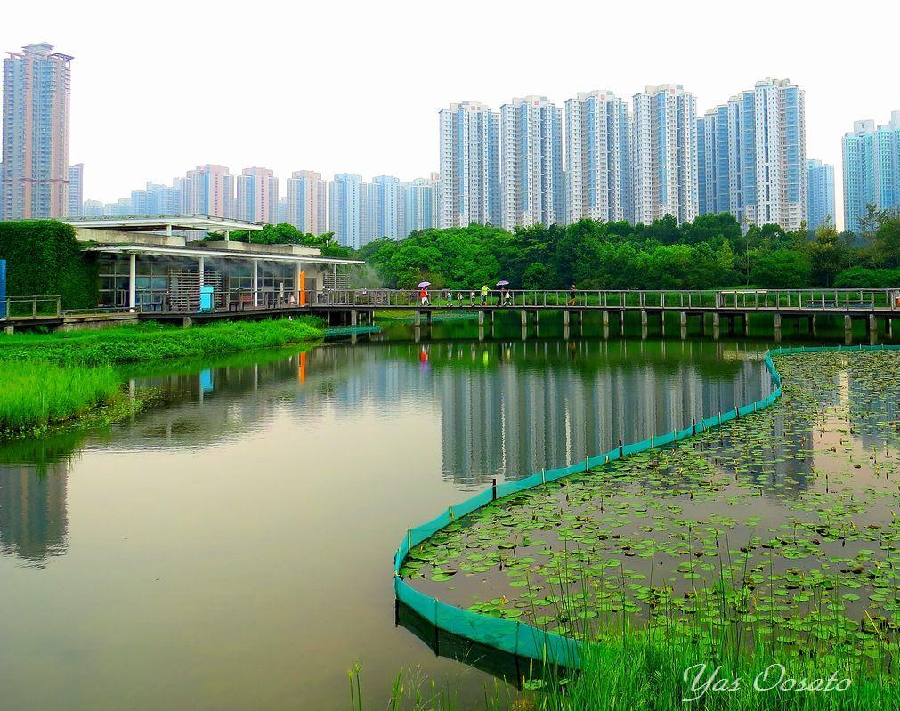 香港湿地公園は都会のオアシス!マングローブと生き物たち