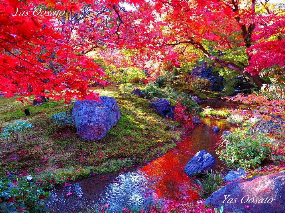 京都の紅葉観光は嵐山!宝厳院で圧倒的な色の世界