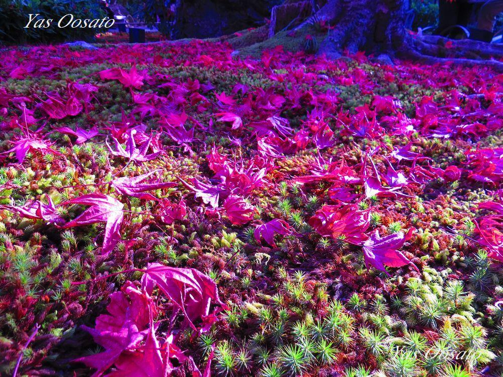 宝厳院の庭園は魅力の撮影スポット