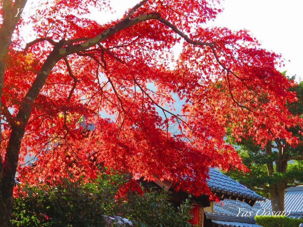 絶景過ぎる紅葉