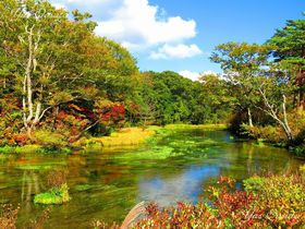 グダリ沼をご存じ?秋の青森観光は東八甲田田代平の絶景!