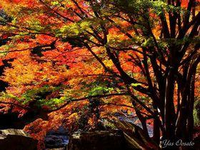 岡山の紅葉は豪渓を外せない!渓谷の美しさに包まれる観光