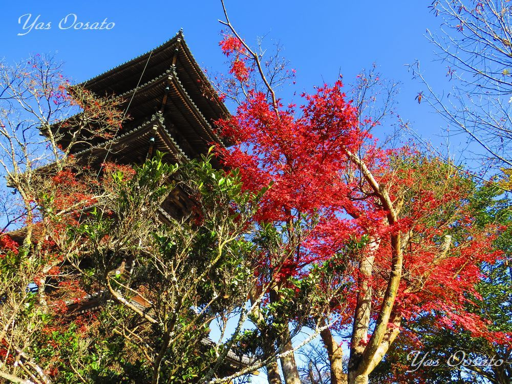 五重塔と紅葉