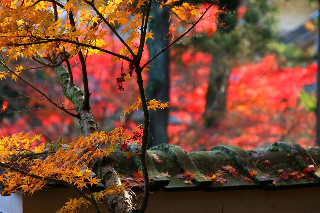 山門をくぐると更なる紅葉の世界