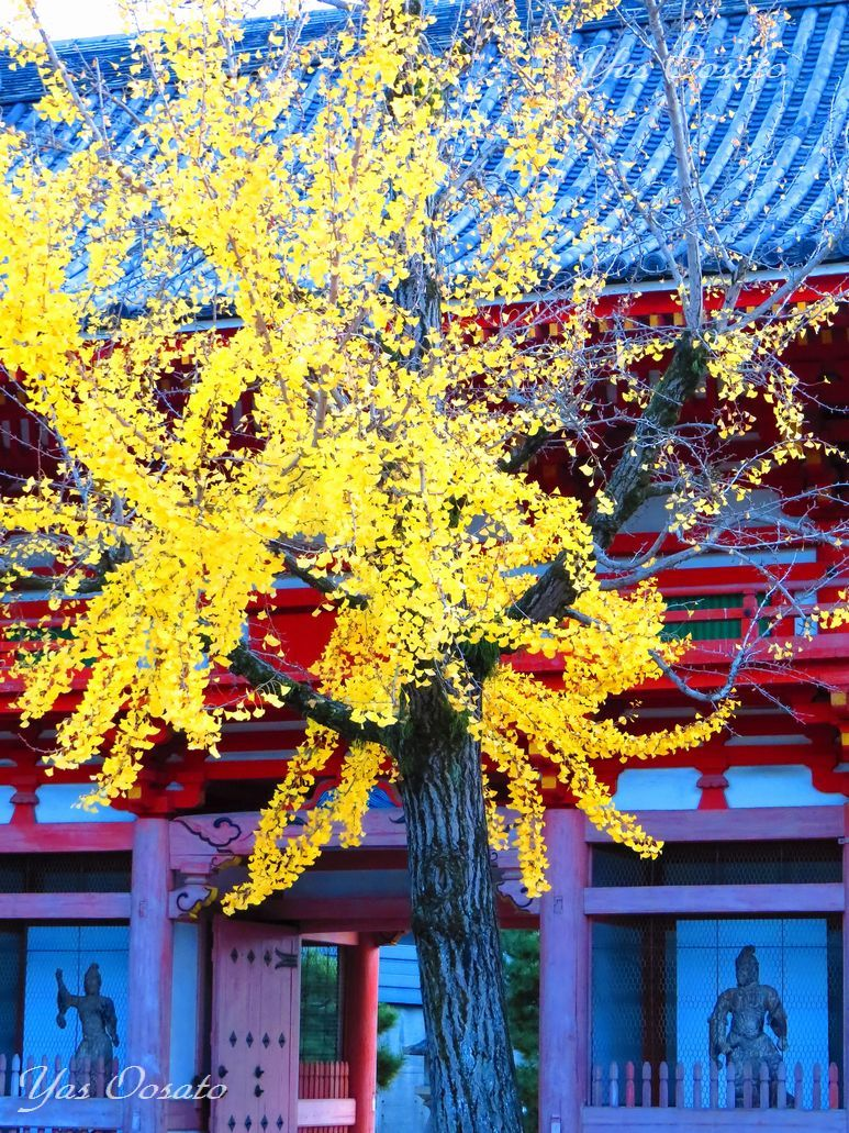 秋の昆陽寺