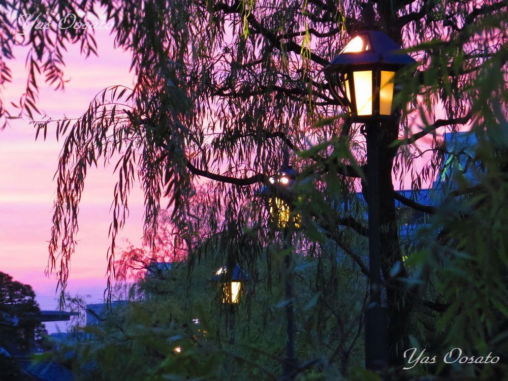 美観地区の夕暮れ