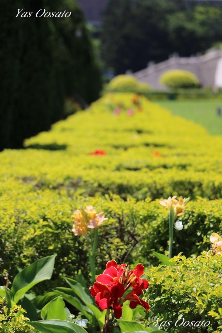 広い敷地と美しき緑