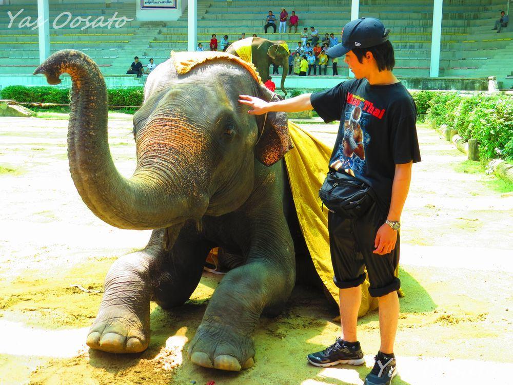 楽しい象のショー