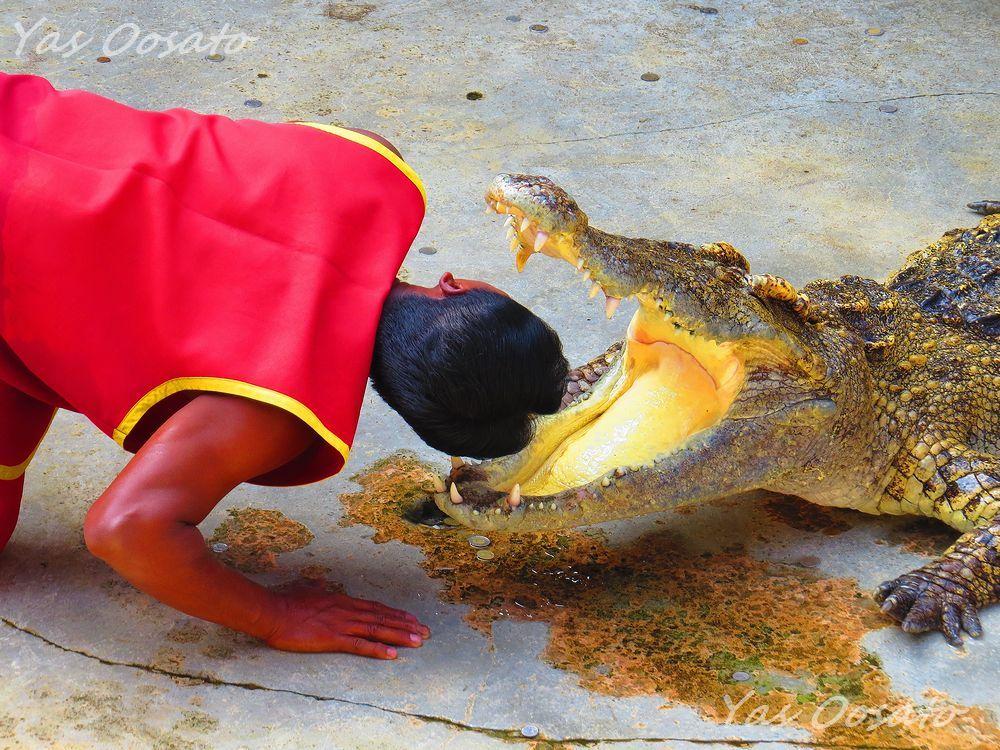 91918f9ea1e4 タイの動物園の海外旅行・観光ガイド | LINEトラベルjp 旅行ガイド