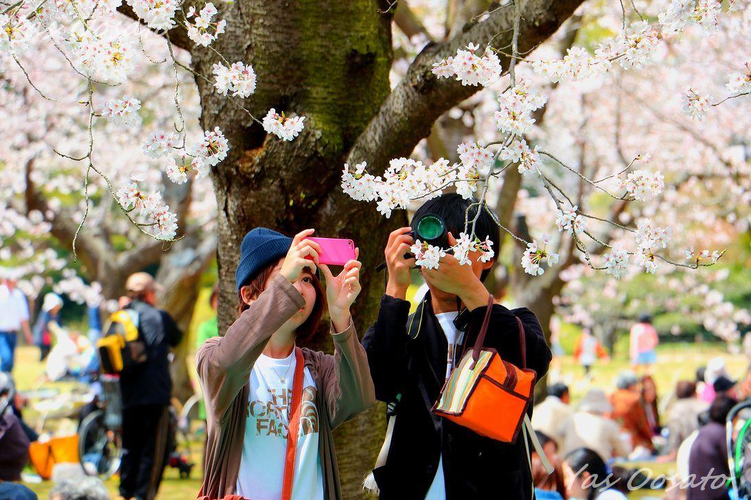 春の花見シーズンは地元民のお楽しみ