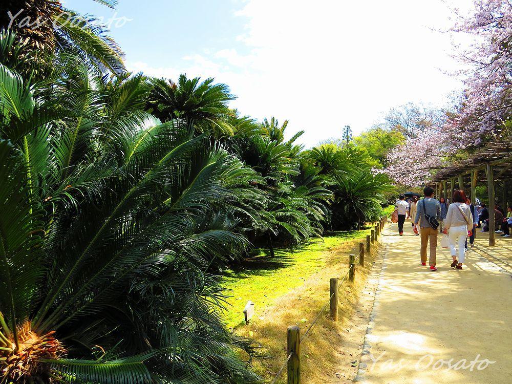日本三名園の一つ「後楽園」で廉池軒、蘇鉄、慈眼堂