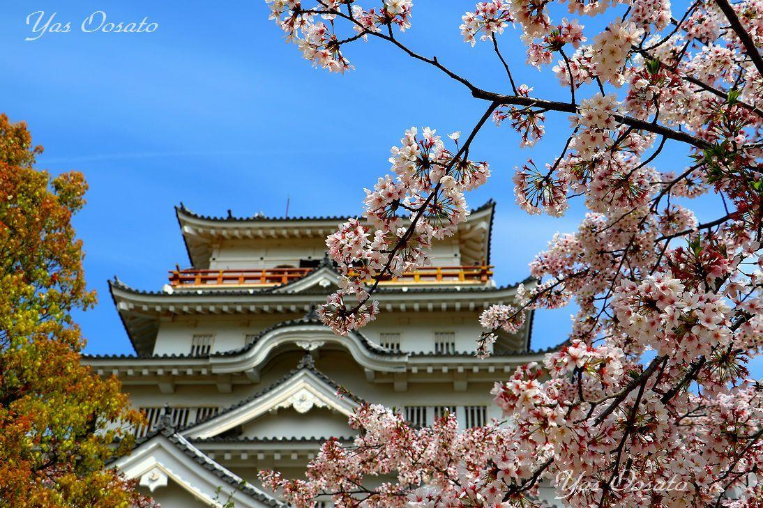 春の広島観光は桜の福山城へ!石垣と苔の美しさも見逃せない和の空間
