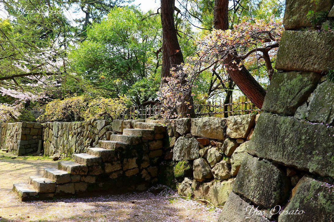 福山城前の黒松と石段