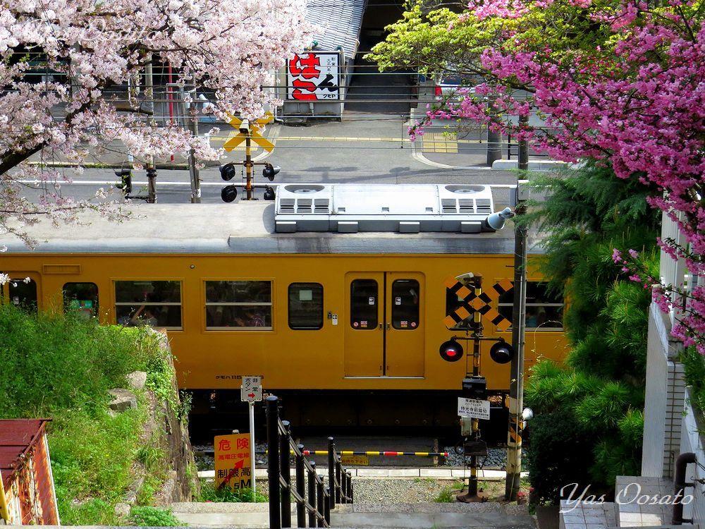 春の尾道・古寺めぐりコースから千光寺公園へ!坂道と桜を楽しもう