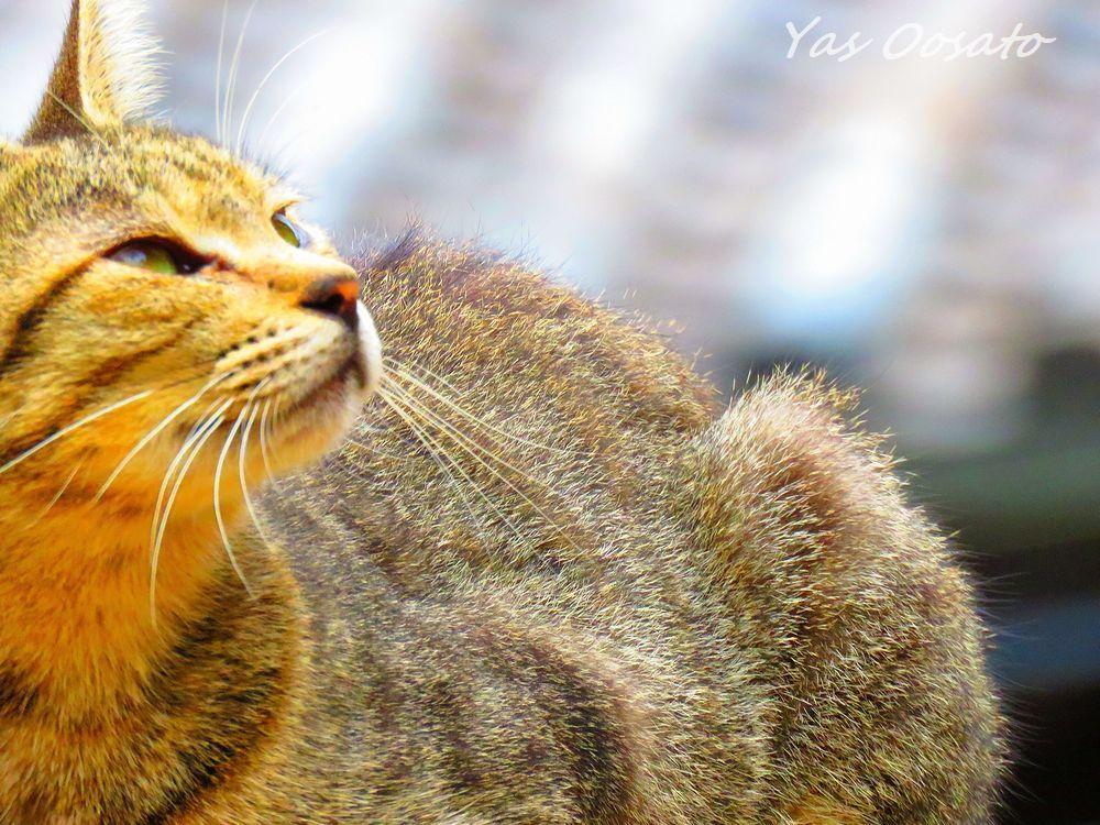 かっこいい猫の姿
