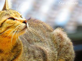 福山市「鞆の浦」で猫、猫、猫!円福寺前の石段は猫の聖地
