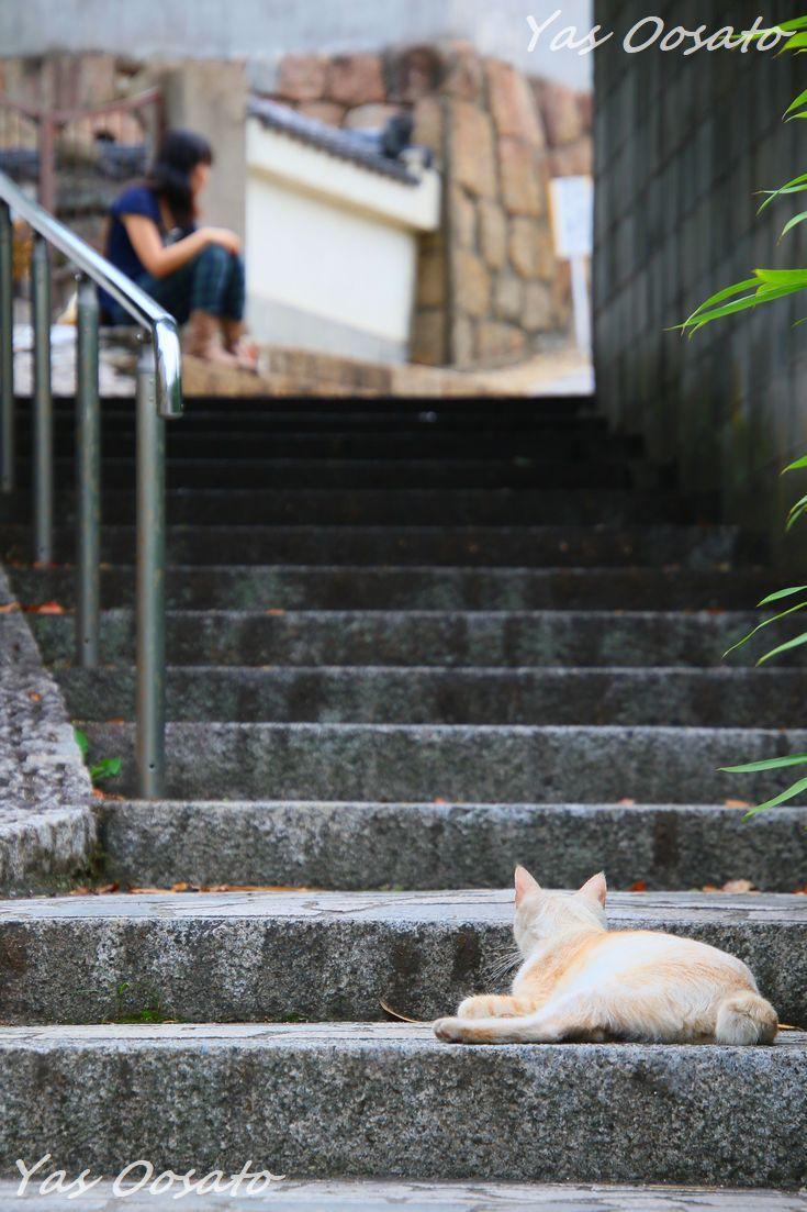 円福寺に至る石段