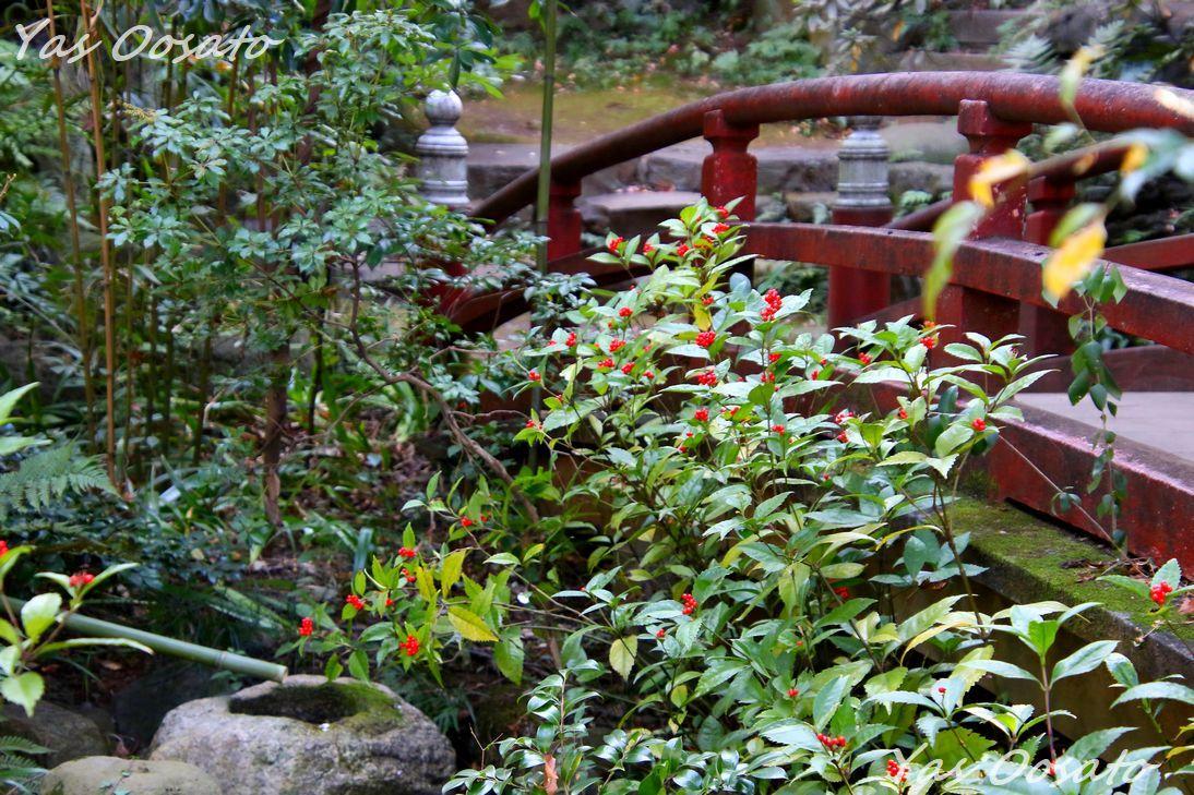 氷川坂側にある勝海舟所縁「四合稲荷」や美しい「太鼓橋」