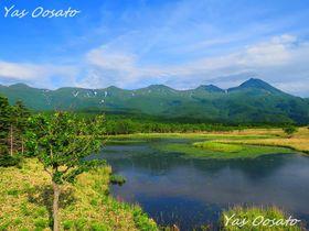 北海道世界遺産「知床五湖」観光で無料の高架木道からの美しさ!