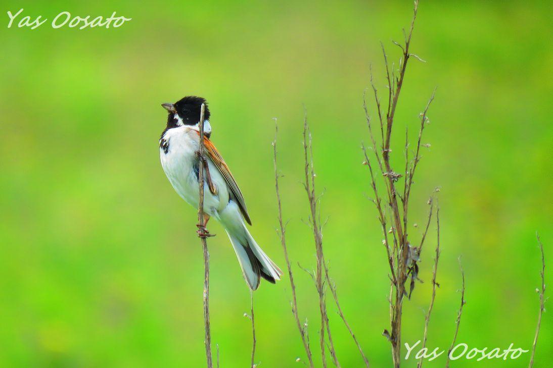 野鳥撮影を楽しもう