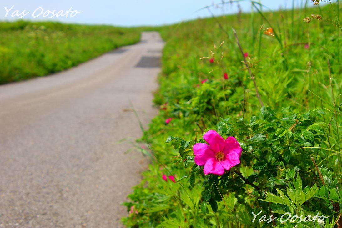 舗装された道と花