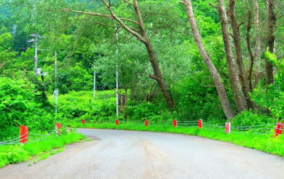 国道229号線から林道へ