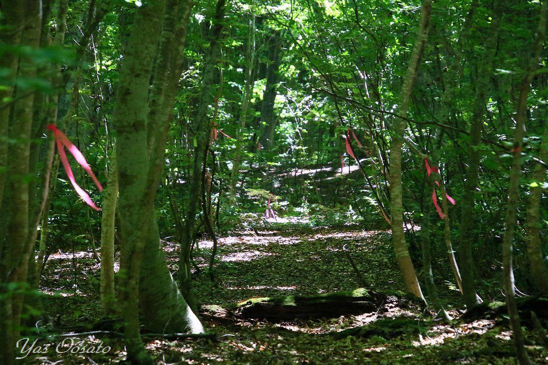 ブナ林散策道で森林浴!