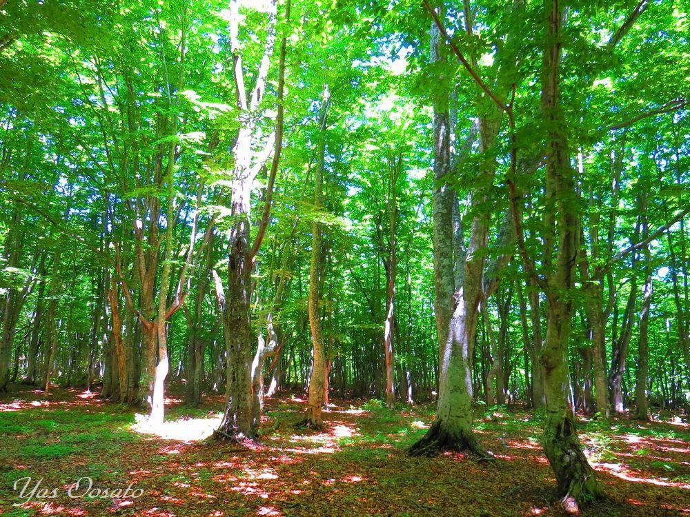 青森「田代高原」は歩かねば損!グダリ沼から緑のブナ林散策道
