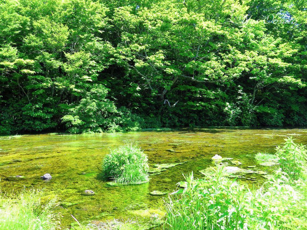 穴場「グダリ沼」の美しさ