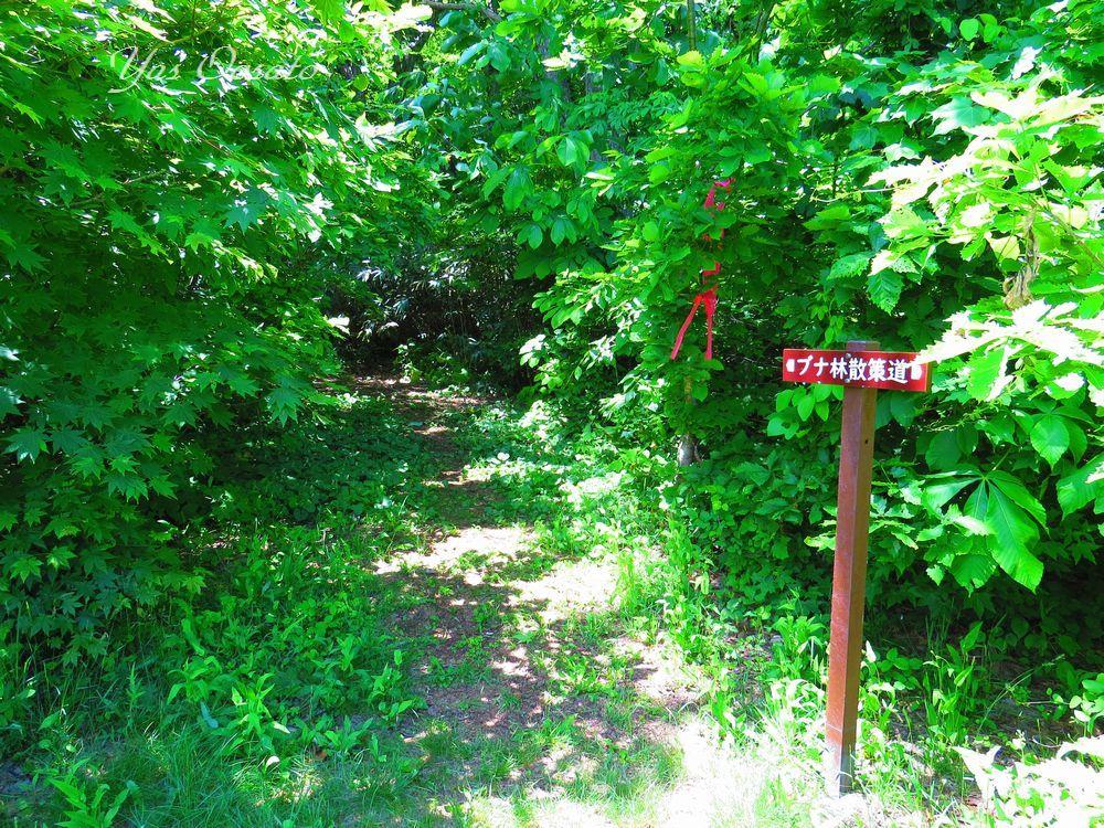 ブナ林散策道に向う
