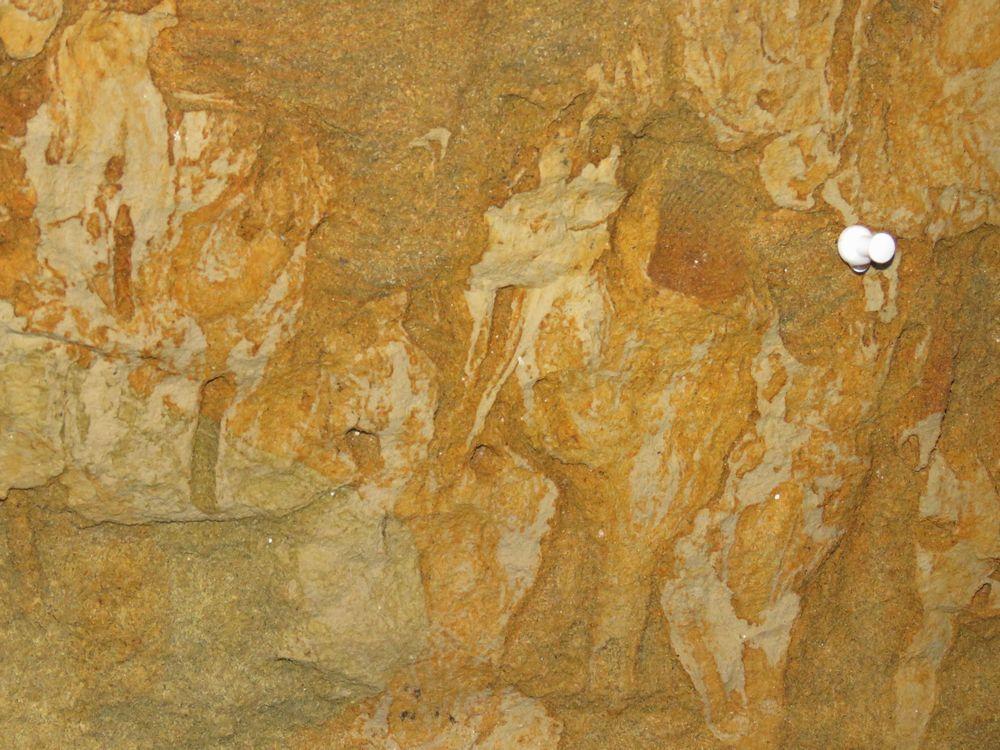 内部の様子と古代の貝殻