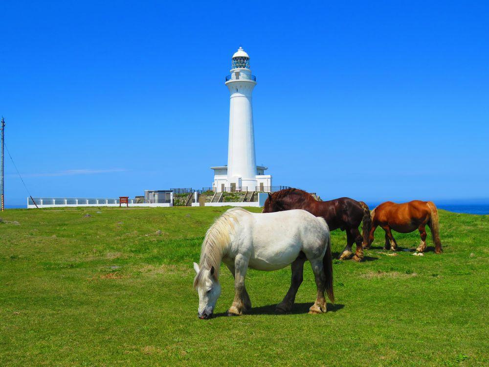 尻屋崎灯台と寒立馬