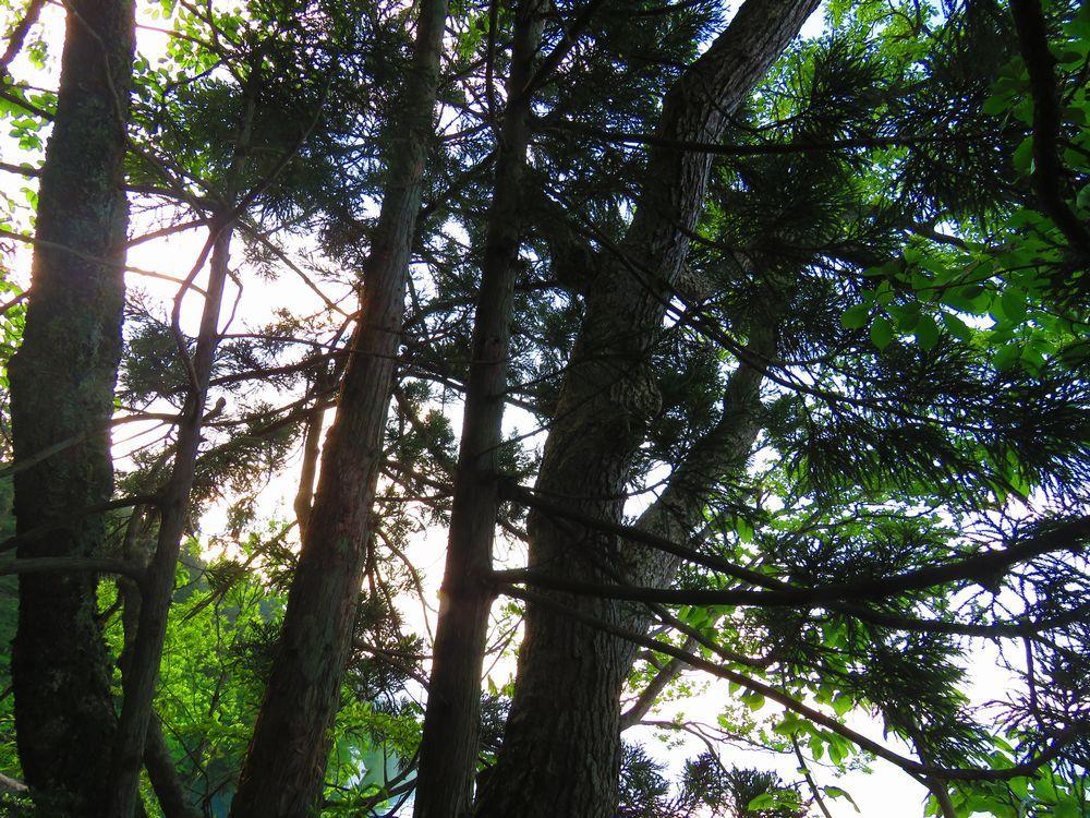 周辺の見どころ御座石、雨乞石、七種木