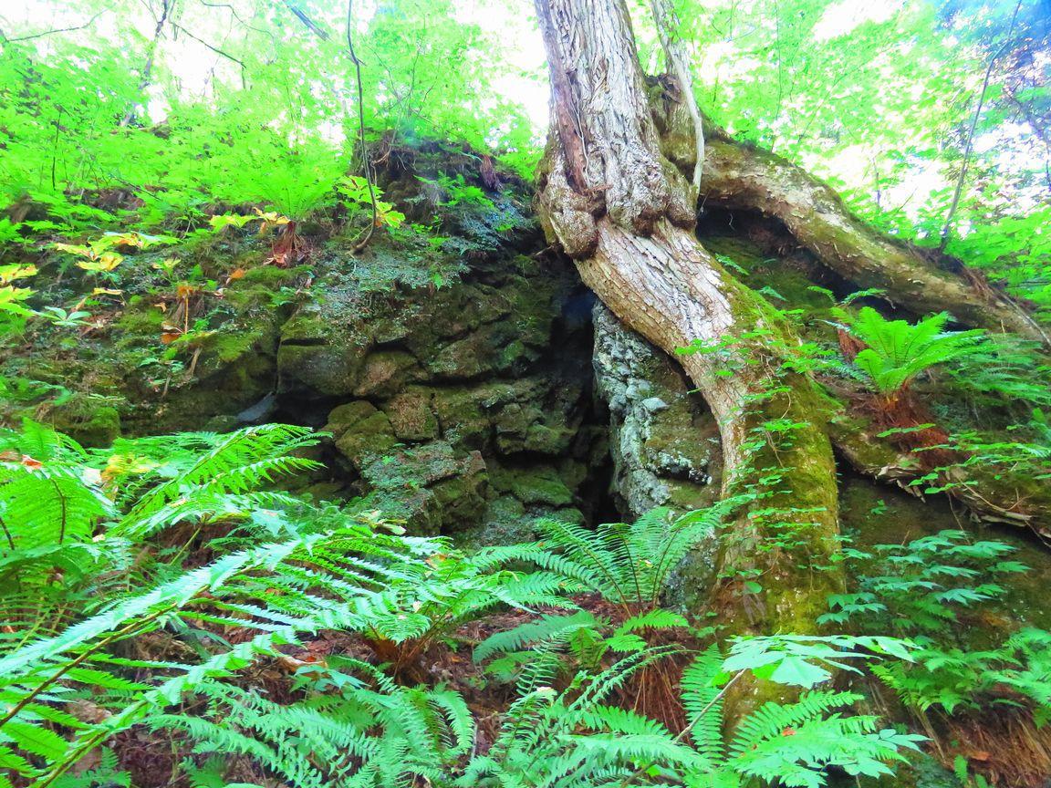 鳥居から見事な杉の並木を歩く