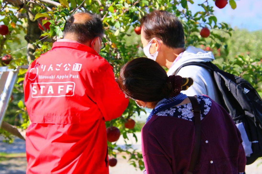 やってみるべし!りんごもぎ取り収穫体験