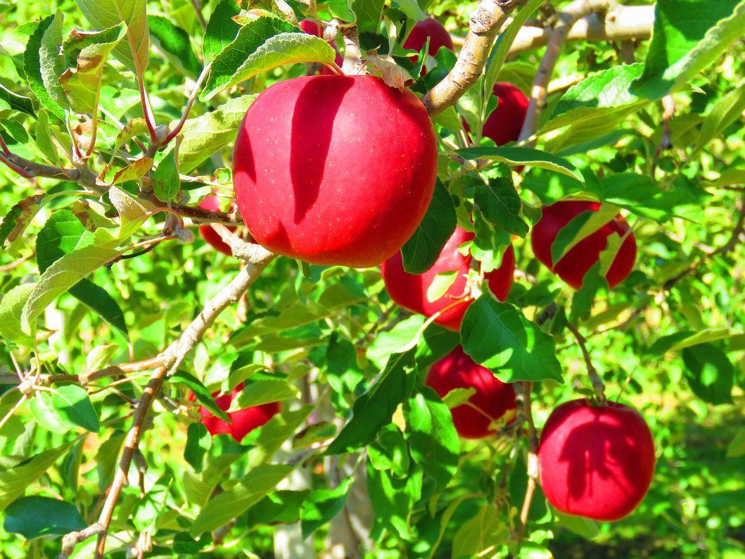 りんご公園内散策