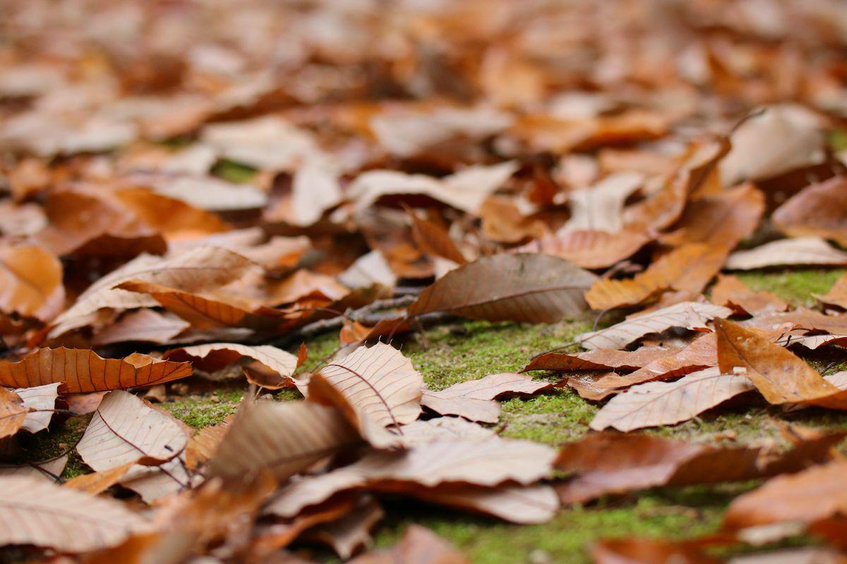 楯築遺跡に向かう秋の散策路