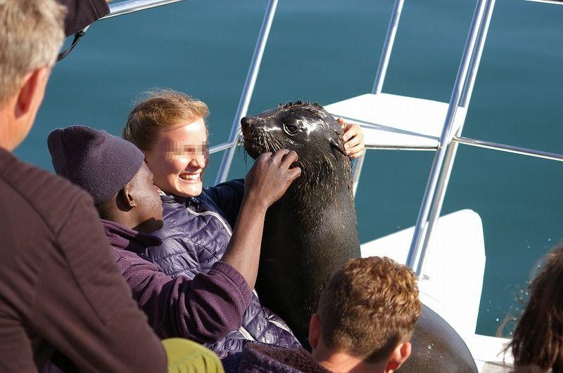 こんな近くにオットセイやペリカンが!ナミビアで自然満喫ボートツアー