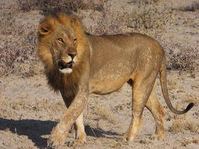 エトシャ国立公園でサファリを!ナミビアで大自然を満喫!