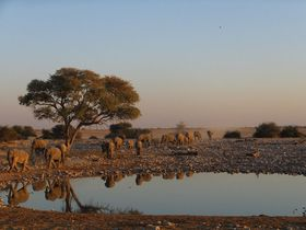 ナミビアのサファリはエトシャ国立公園の宿泊施設で快適に!
