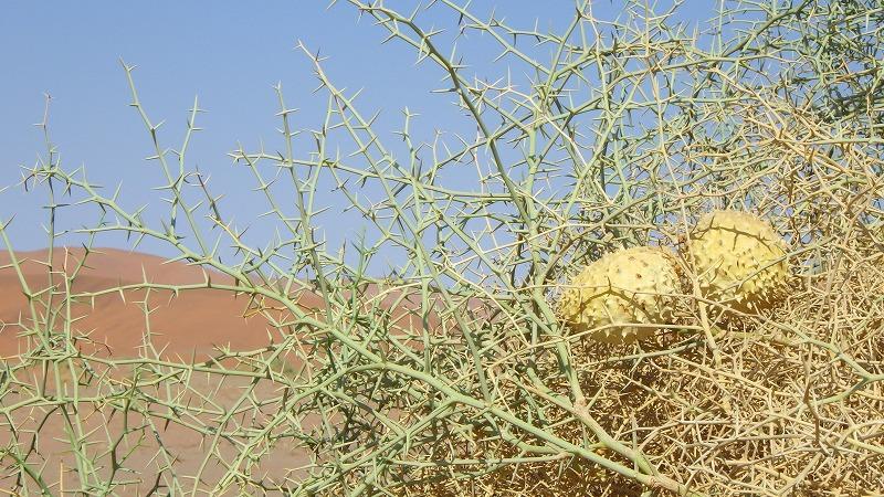 乾いた砂漠で生きる生命力の強い植物
