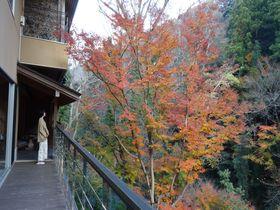 中伊豆「谷川の湯 あせび野」で森と渓流の温泉を楽しむ