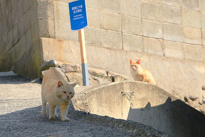 路地を歩けば猫に出会える