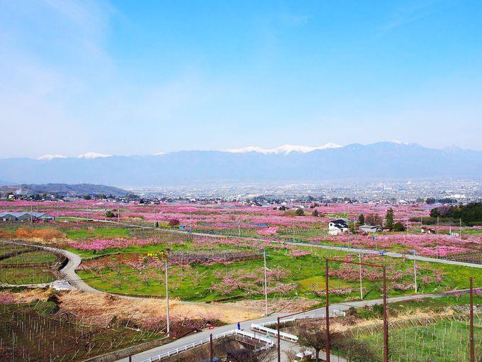 のんびり春の景色を楽しむ桃源郷散策コースも大人気!