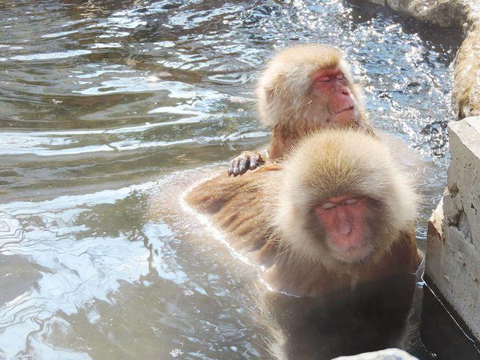 シャッターチャンスは逃さずに!色々な猿の表情を撮影してみよう!