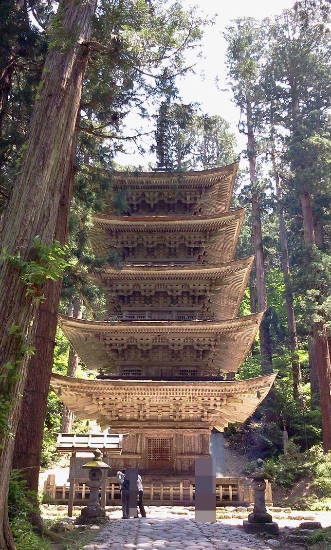 杉並木の中に現れる国宝五重塔