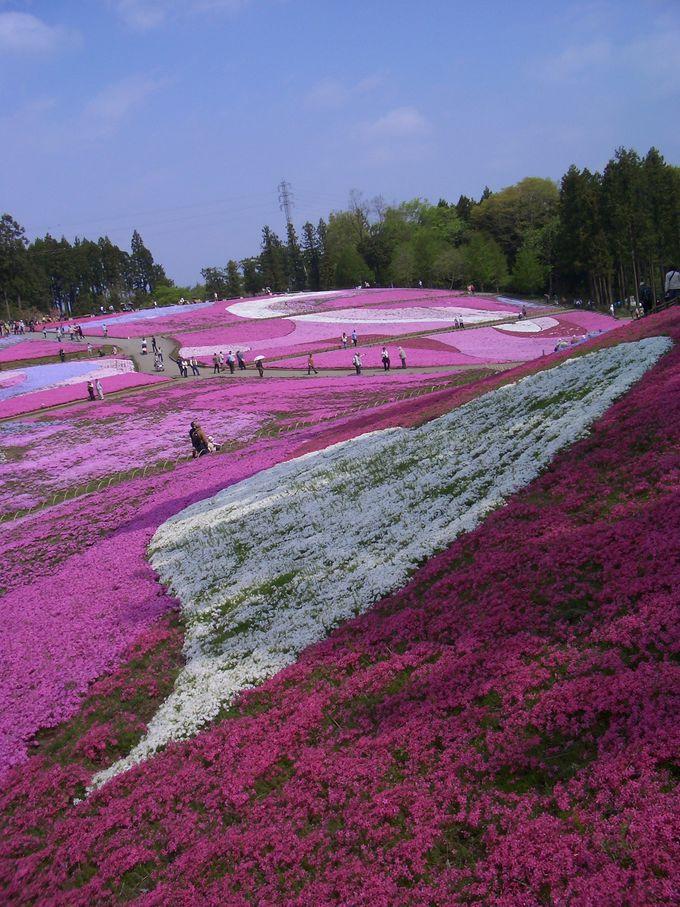芝桜に囲まれての散策はメルヘンな世界!